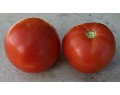 Red Snapper VF/Aal (Hybrid Bush Tomato)
