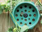 Solitary Pollen Bee Nest