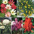 Pollinator Paradise Special Collection