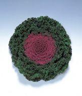 Kamome Red (Flowering Kale)
