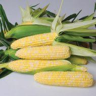 Gourmet Sweet™ Nirvana (Corn/hybrid/bicolor)