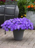 Easy Wave Lavender Sky Blue (Petunia/multiflora/pelleted)