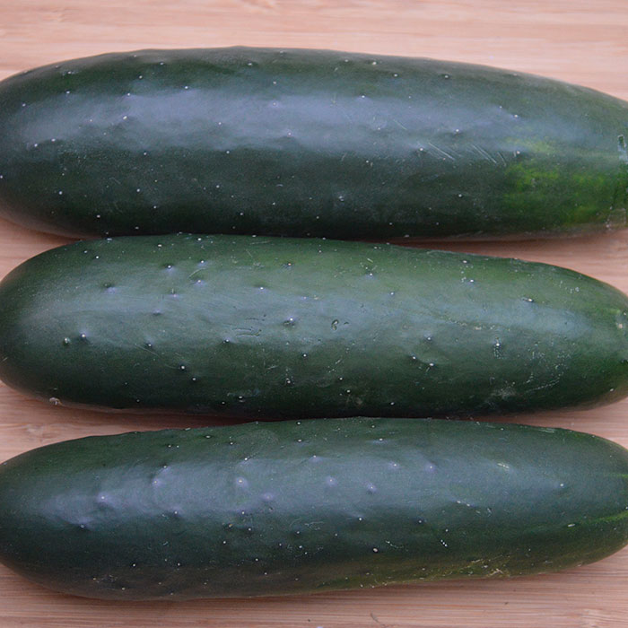 Brickyard (Cucumber/slicing)