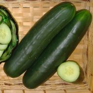 Dominator (Cucumber/slicing)