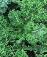 Vates Blue Curled (Kale/O/P)