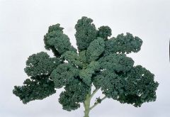 Blue Ridge (Kale)