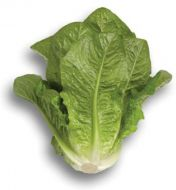 Patrona M.I. (Lettuce/Romaine/Cos/pelleted)