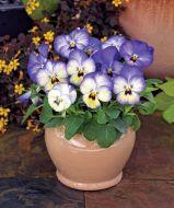 ColorMax Icy Blue (Viola/primed)