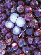 Monastrell (Onion/red/hybrid)
