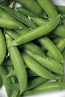 Lincoln (Garden peas/mid season)