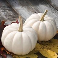 Casperita (Hybrid Pumpkin)