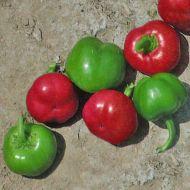 Sweet Cherry Large (Hybrid Cherry Pepper)