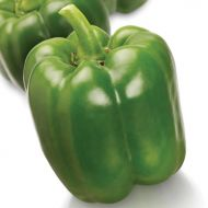 SV3964PB (X4R) (Hybrid Sweet Pepper)