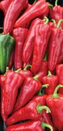 Carmen (Hybrid Tapered Pepper/untreated)