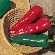 Marcato (Hybrid Tapered Pepper)