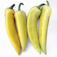 Ducado (Hybrid Banana Pepper)