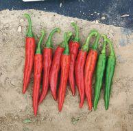 Ring Of Fire (Hot Pepper)