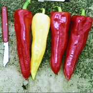 Hungarian Yellow Wax (Hot Pepper)