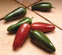 Jalapeno M (Hot Pepper)