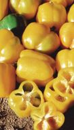 Yellow Belle II (Colored Pepper, O/P)