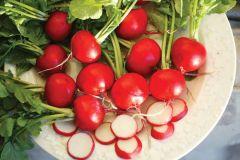 Red Satin (Hybrid Radish)