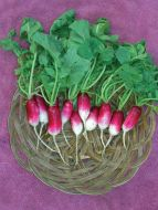 French Breakfast (Novelty Radish)