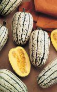 Delicata (Sweet Potato Squash)