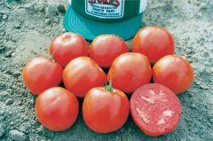 Hy-Beef 9904 VFT (Hybrid Bush Tomato)