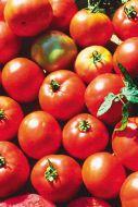 Ultrasonic VFT (Hybrid Staking Tomato)