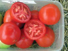 Red Mountain (Hybrid Bush Tomato)