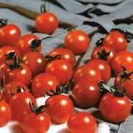 Sweet Million TMV FN (Hybrid Cherry Tomato)