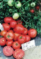 Ultra Sweet VFT (Hybrid Staking Tomato)