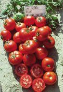 Brillante VFFT (Hybrid Staking Tomato)