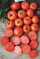 Mountain Glory VFFF/TSWV (Hybrid Bush Tomato)