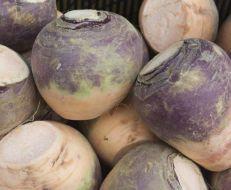 American Purple Top (Rutabaga)