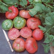 Brandywine (Novelty/Heritage Tomato)