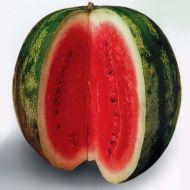 Crimson Sweet (Watermelon/diploid/O/P)