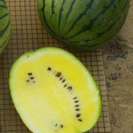 Yellow Doll (Watermelon/diploid)