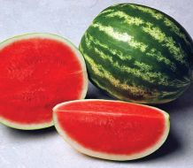 Exclamation (Watermelon/triploid)