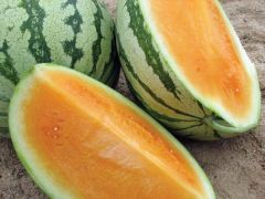 Orange Crisp (Watermelon/triploid)