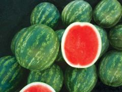 Melody (Watermelon/triploid)