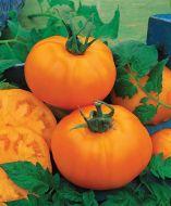 Chef's Choice Orange (Hybrid Tomato)