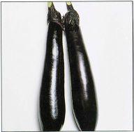 Millionaire (Eggplant/hybrid)