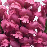 Potomac® Pink (Snapdragon/tall)