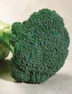 Emerald Crown (Broccoli)