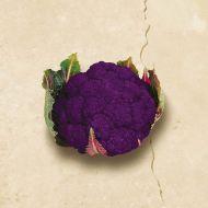 Graffitti (Cauliflower/purple)