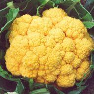 Cheddar (Cauliflower/orange)