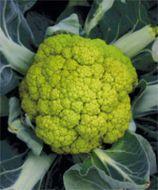 Verdi (Cauliflower/apple green)