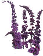 Violet Butterfly (Buddleya)