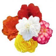 Nonstop Joy Mix (Begonia pellets/tuberous)